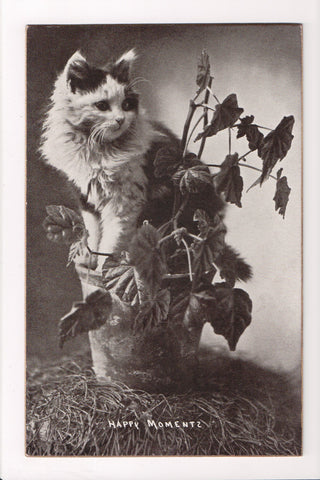 Animal - Cat or cats postcard - black and white fur, on a plant - A06767
