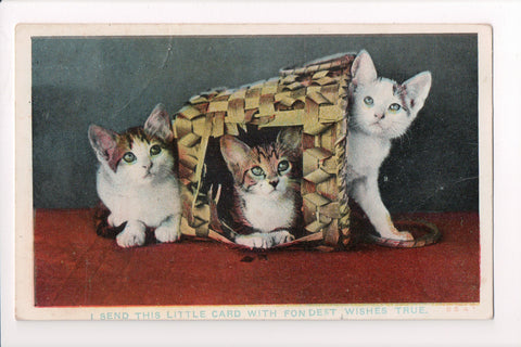 Animal - Cat or cats postcard - 3 kittens in and around basket - A06781