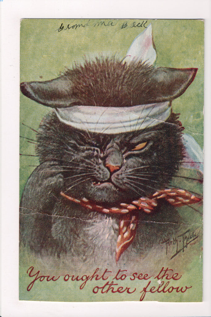 Animal - Cat or cats postcard - Black cat after a fight - Thiele - B10011