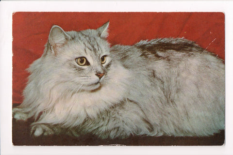 Animal - Cat or cats postcard - Gray long haired cat closeup - B10032
