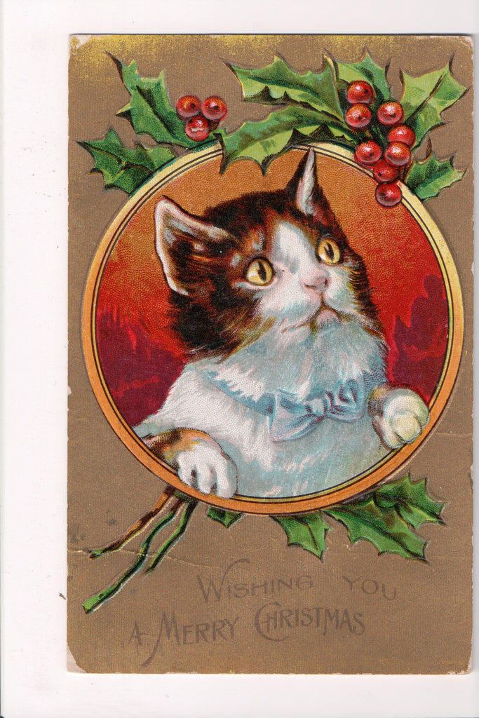 Animal - Cat or cats postcard - Xmas Cats Series, WIDE eyed with blue bow - C171
