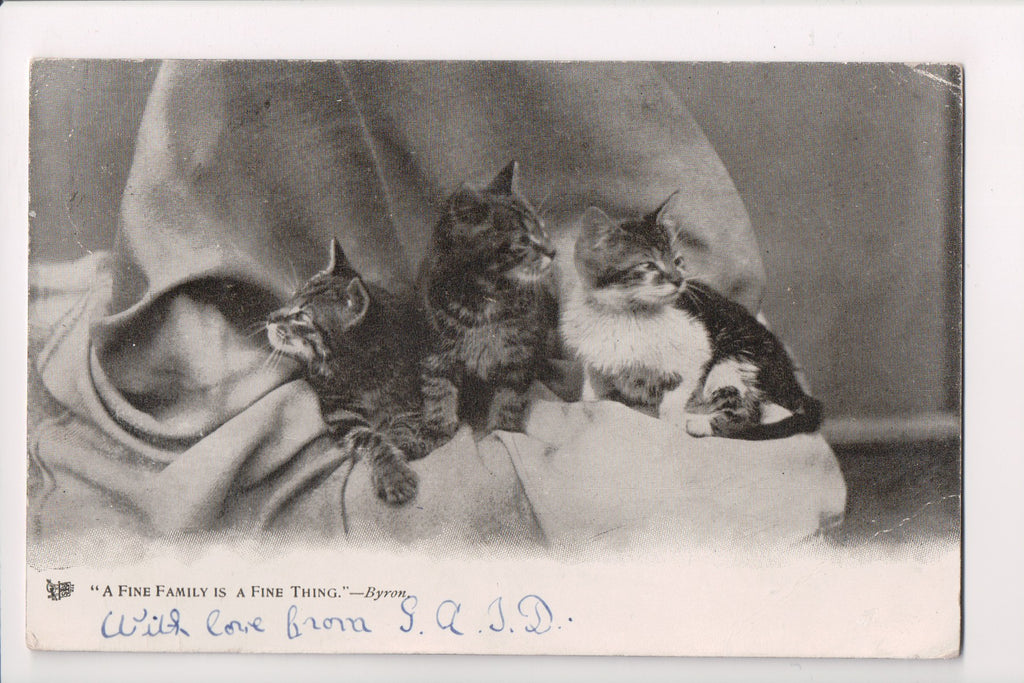 Animal - Cat or cats postcard - kittens - Tucks Animal Life Series - EP0172