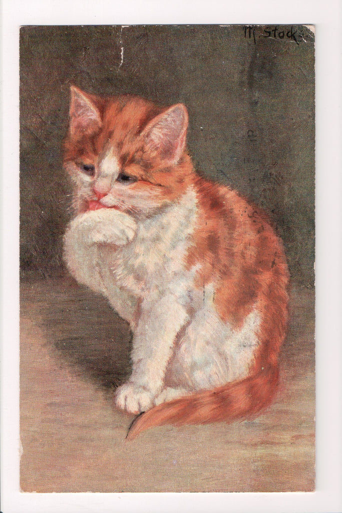 Animal - Cat or cats postcard - Kitten licking its paw - @1908 postcard - S01519