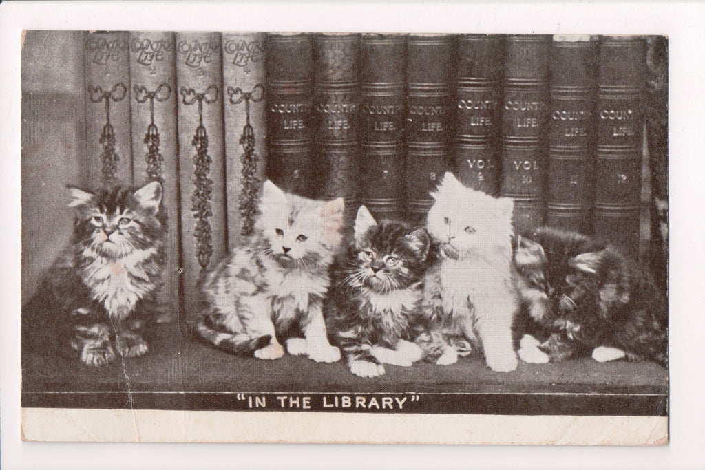 Animal - Cat or cats postcard - 5 kittens - IN THE LIBRARY - SH7132