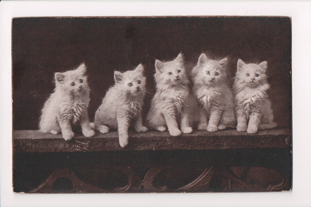 Animal - Cat or cats postcard - white kittens on board - The Cute Kitty - SL2652