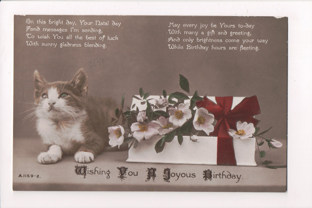 Animal - Cat or cats postcard - Young cat - birthday box of flowers - RPPC - VA0