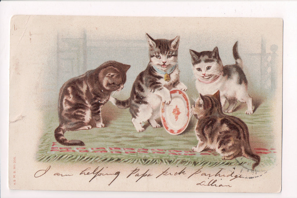 Animal - Cat or cats postcard - kittens playing with a plate - @1906 - w01399
