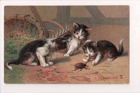 Animal - Cat or cats postcard - A STRANGER, kittens with BUG @1908 - D08070