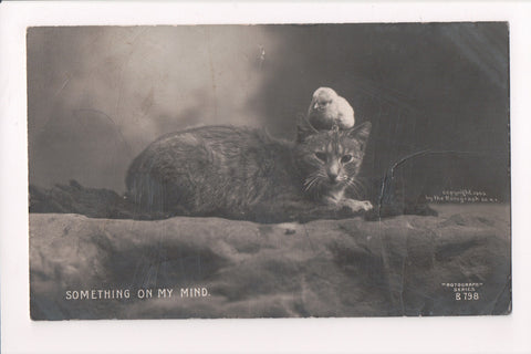 Animal - Cat or cats postcard - chick sitting on head - Rotograph RPPC - 400105