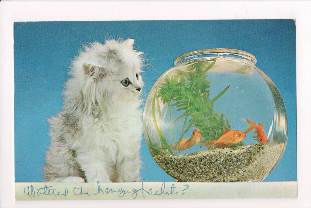 Animal - Cat or cats postcard - kitten staring at goldfish in bowl - VT0017