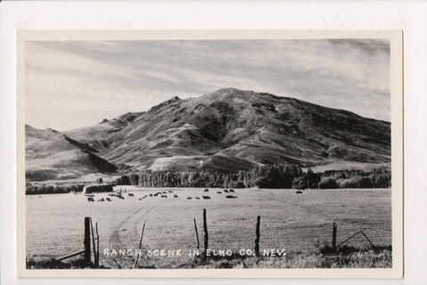 NV, Elko Co - Ranch Scene, cows in field RPPC postcard - E04299