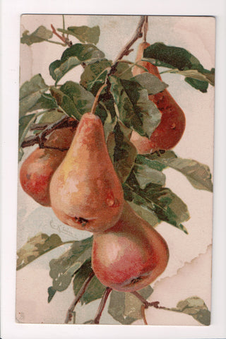 Greetings - Misc - Artist signed C Klein - Pear on branch postcard - 505051