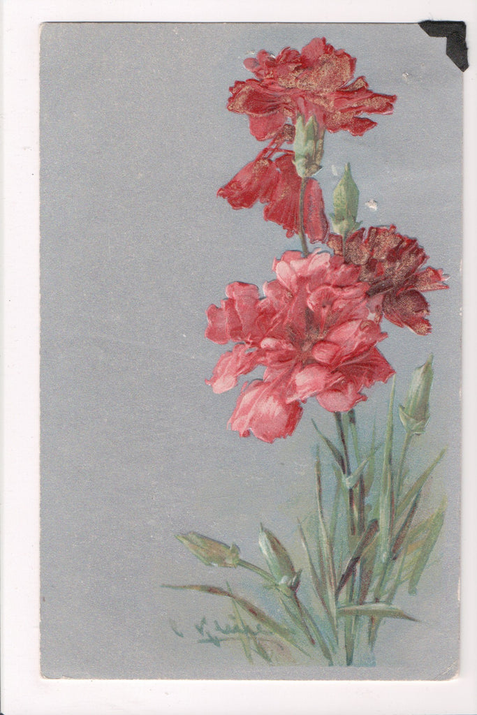 Greetings - Misc - Artist signed C Klein - Carnation? flowers postcard - 700226