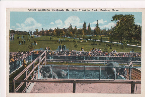 MA, Boston - Franklin Park, Elephants Bathing - ADDRESS YOUR MAIL logo - K06059