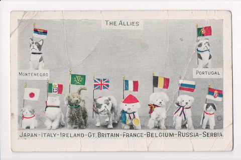 MISC - Military - The Allies - 10 dogs along with flags - AS IS - C06599