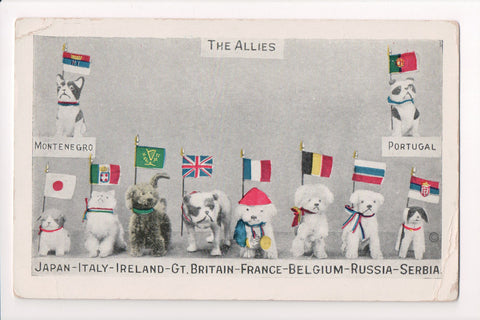 MISC - Military - The Allies - 10 dogs along with flags - C06719