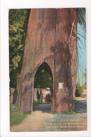 WA, Snohomish - Largest Cedar in State, lady and man with bikes @1916 - C06087
