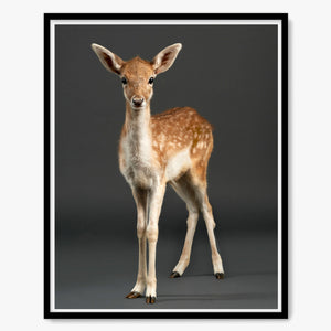 Doenut the baby Fawn No. 2