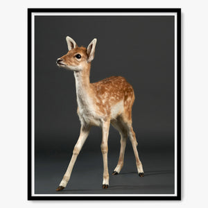 Doenut the Baby Fawn No.1