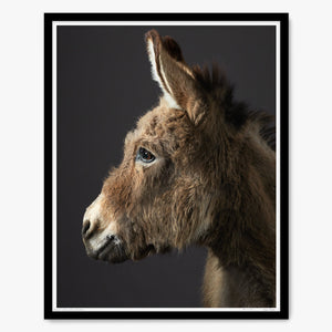 Portrait of Stanley the Donkey