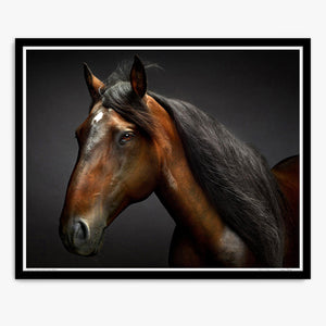 Portrait of Touche the Lusitano Stallion