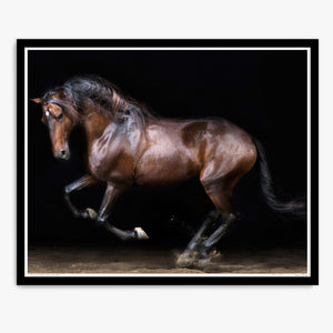 Touche the Lusitano Rearing
