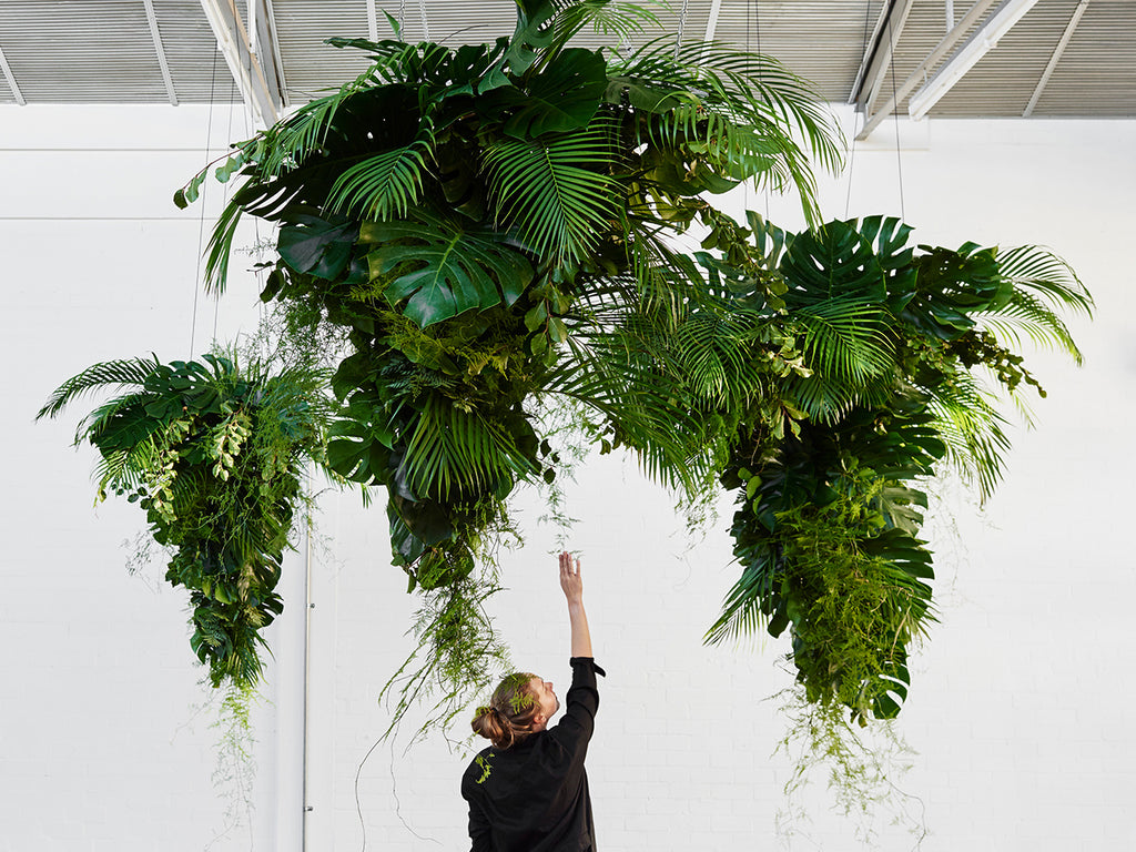 hanging monstera tornado