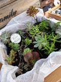 Gift Box Succulents - Assorted Tubestock LOCAL DELIVERY ONLY