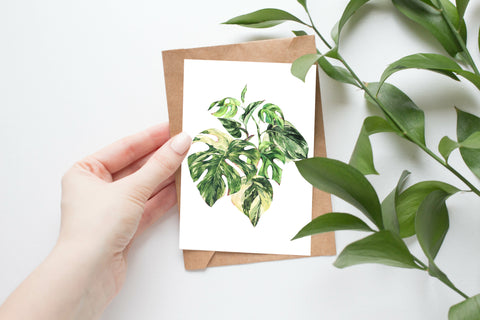 Variegated Monstera - Postcard Size