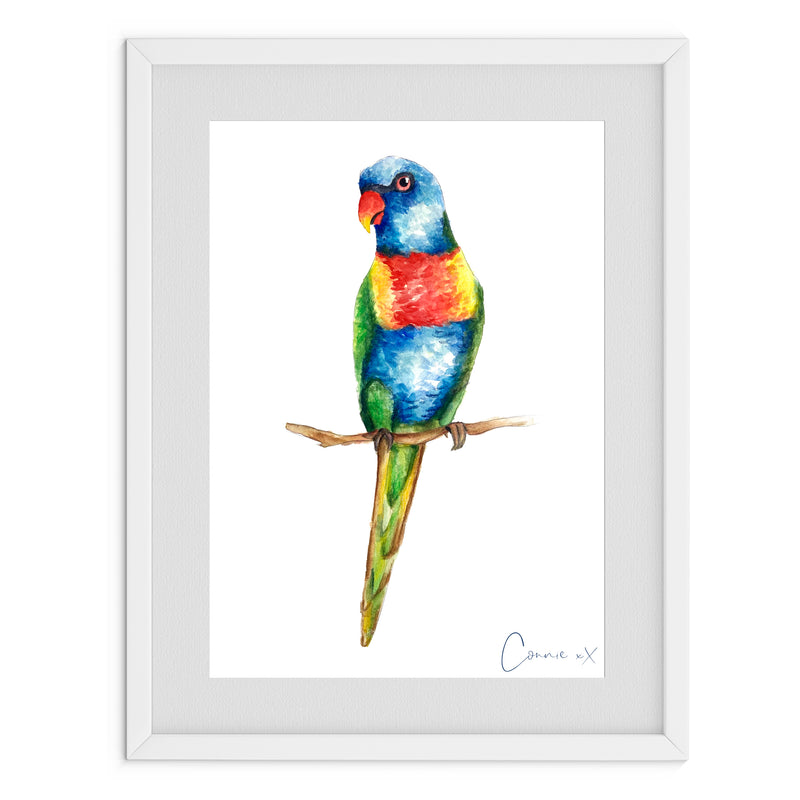 Rainbow Lorikeet Watercolour Print