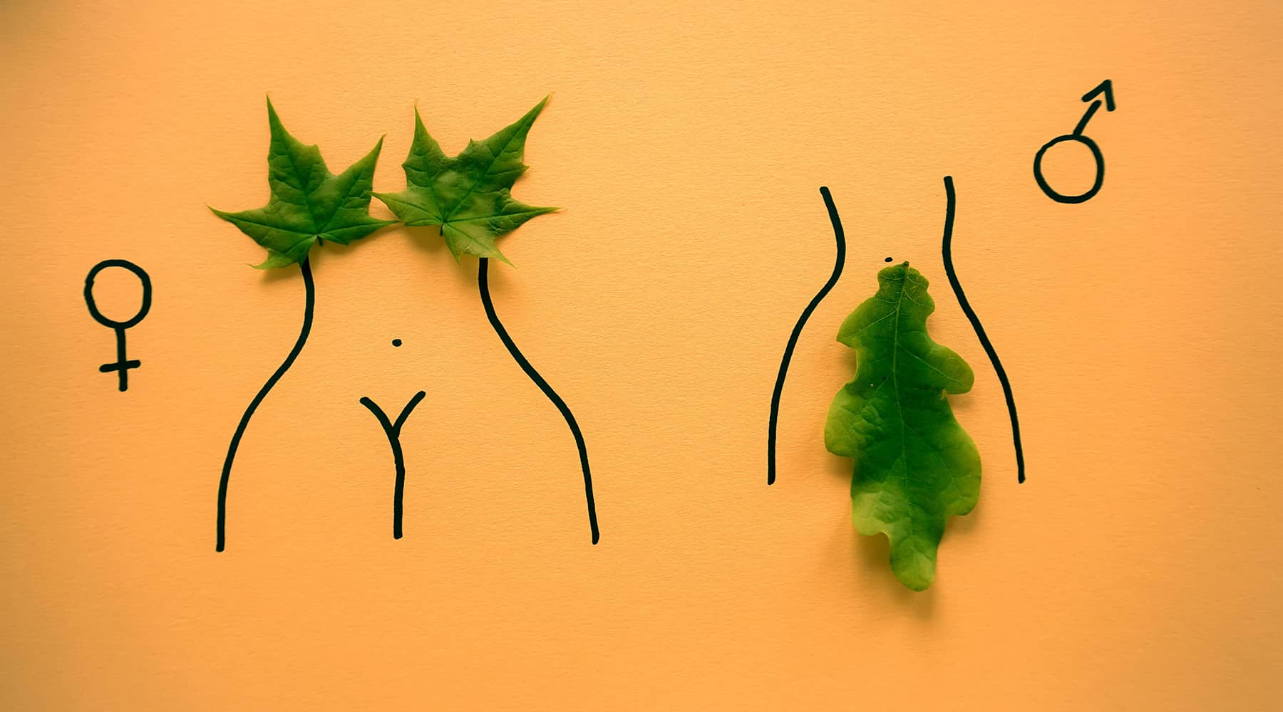 Green leaves cover male and female genitalia on an orange color background