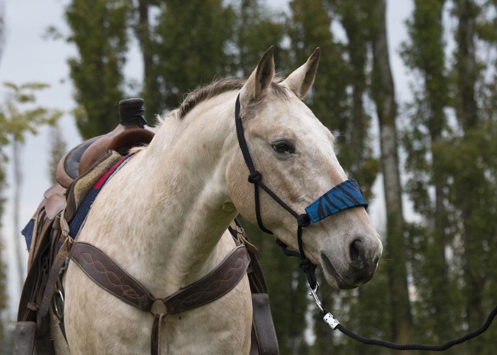 Bronc Nosed Rope Halter & Lead