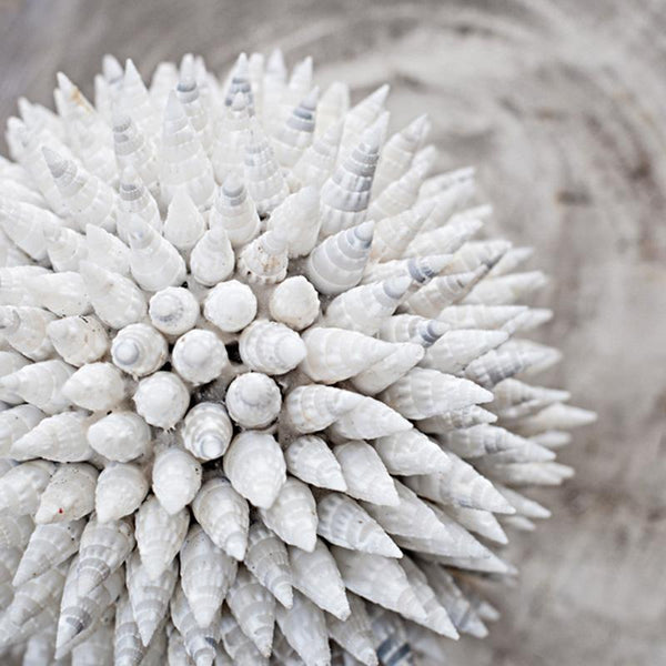 Shell Ball Spiky