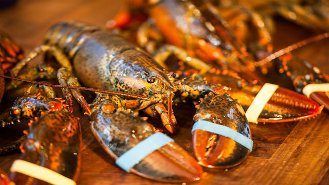 How to prepare Live Maine Lobster: 4 different ways