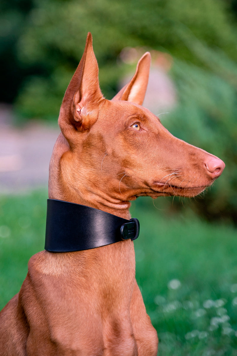 Hound Collar Black Matt