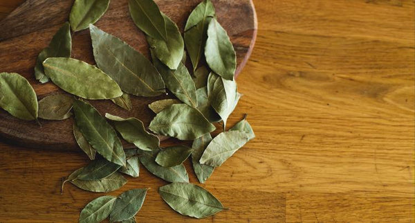 Bay Laurel Essential Oil: Fear, Pain, Gut Instincts, and Breathing