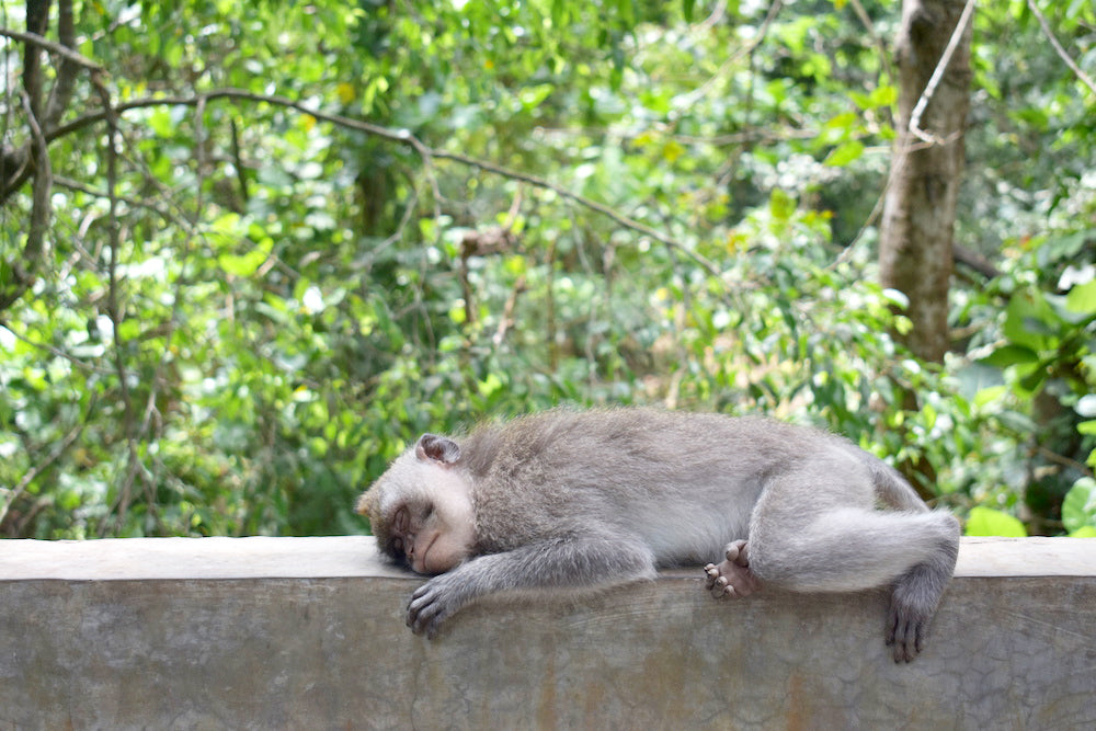 monkey forest ubud bali travel guide wanderlust to do island