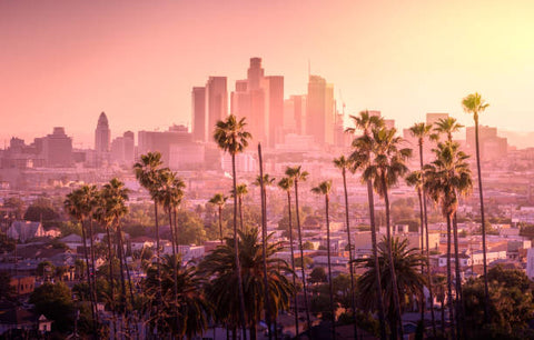 Photo of downtown Los Angeles with palm trees in the foreground