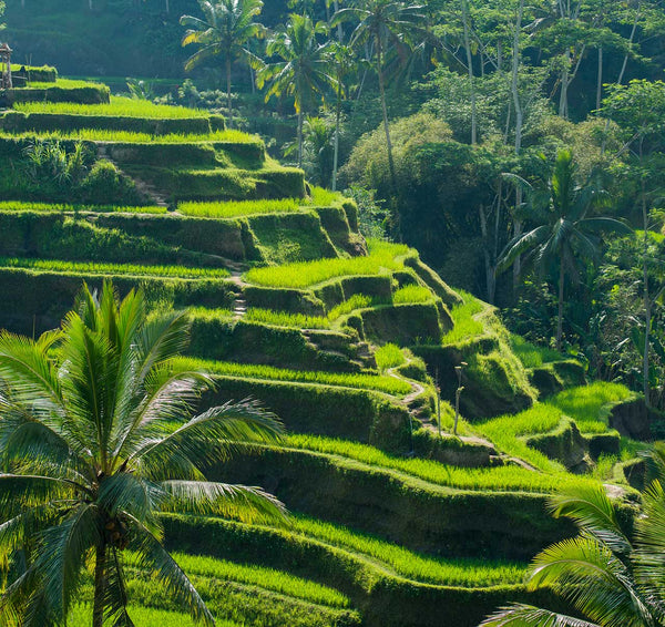 Tegalalagang Rice Terrace bali indonesia tourist travel guide wanderlust