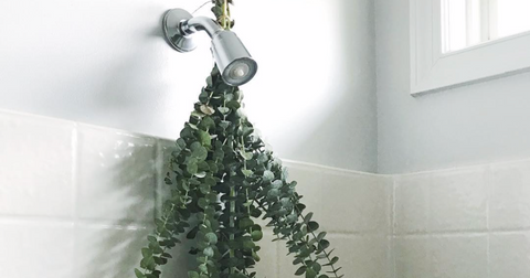 A sprig of eucalyptus hung from a shower heaf