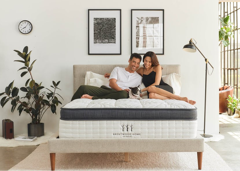 Couple in a room petting their dog on an organic Brentwood mattress.