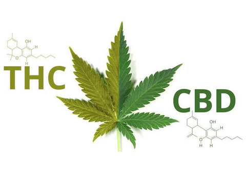 THC and CBD leaves and chemical skeletal structures
