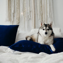 Husky lying on pillow fitted with Cloud 9 Silk Pillowcase in Night-Sky Navy on white bed.