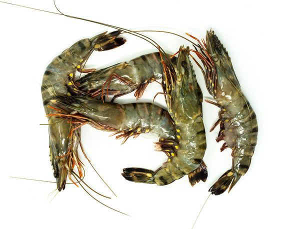 Tiger King Prawns (Raw) for sale - Parson's Nose