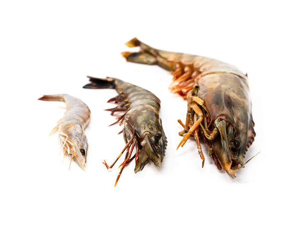 GIANT Tiger King Prawns (Raw) for sale - Parson's Nose