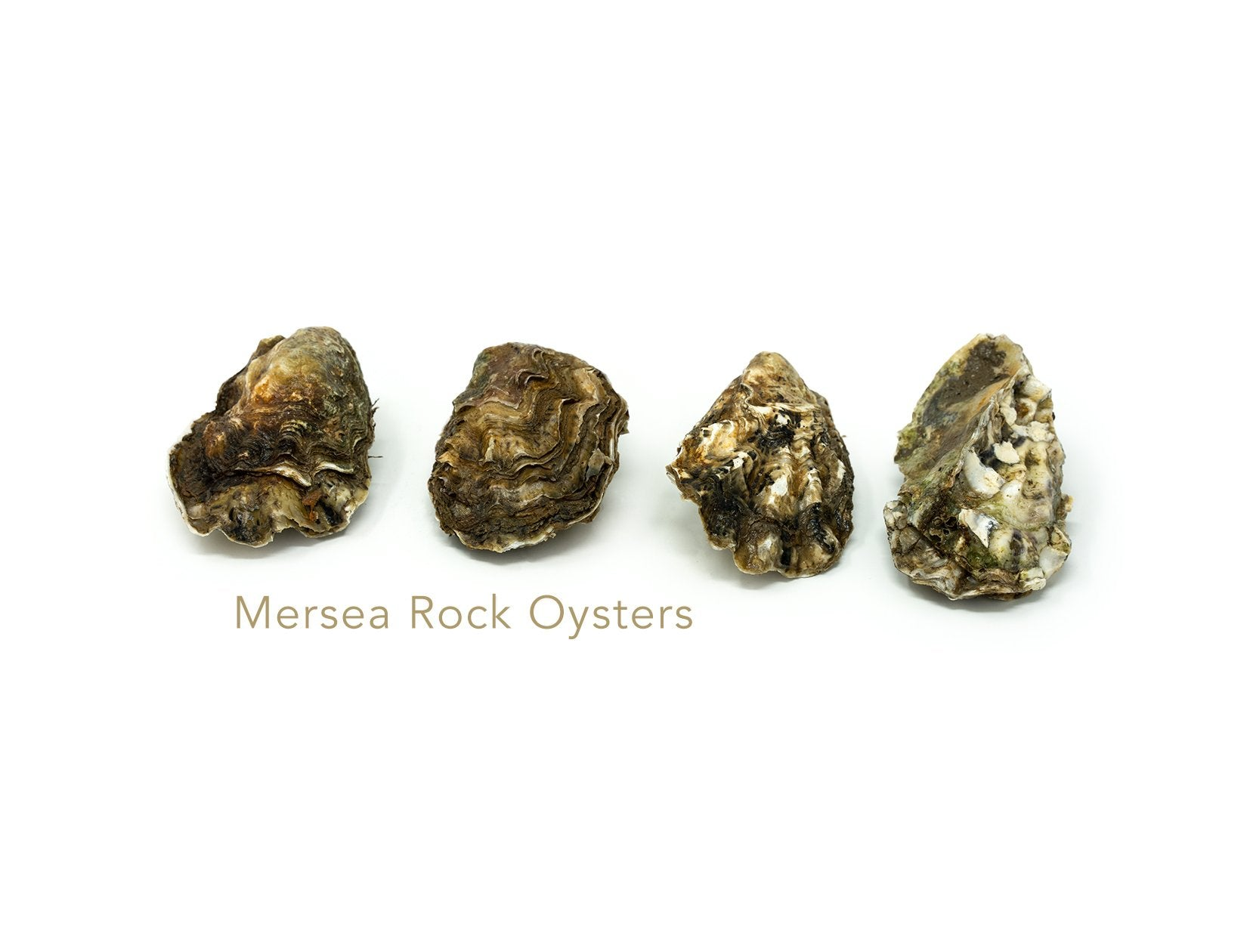 Oysters (Mersea) for sale - Parson's Nose
