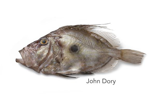 400-600 John Dory for sale - Parson's Nose