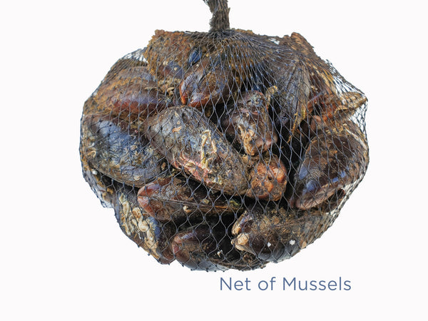 1.7kg Mussels for sale - Parson's Nose