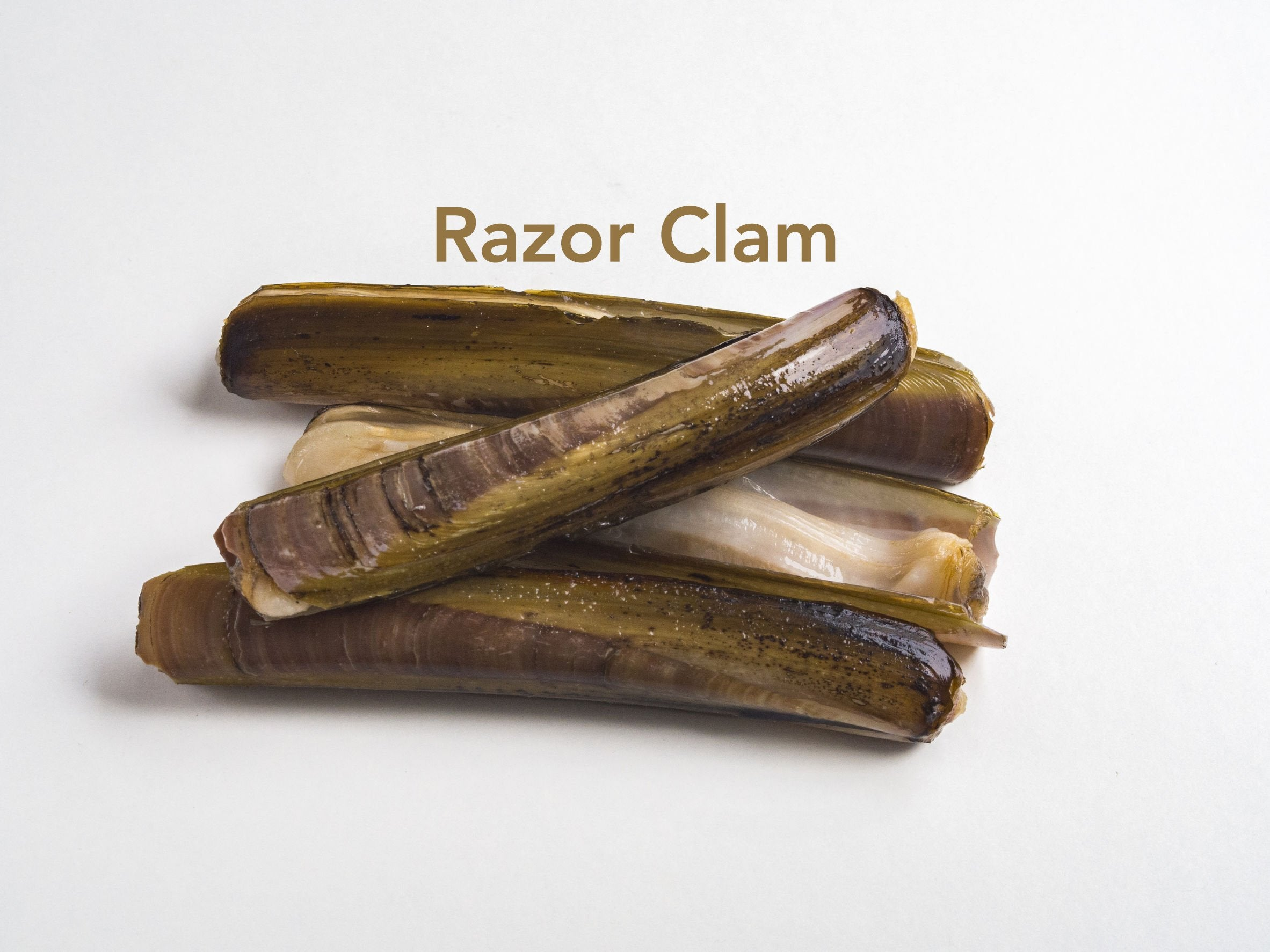 Razor Clams for sale - Parson's Nose