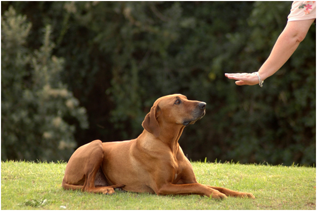5 Basic Obedience Training Words For Your Dogs